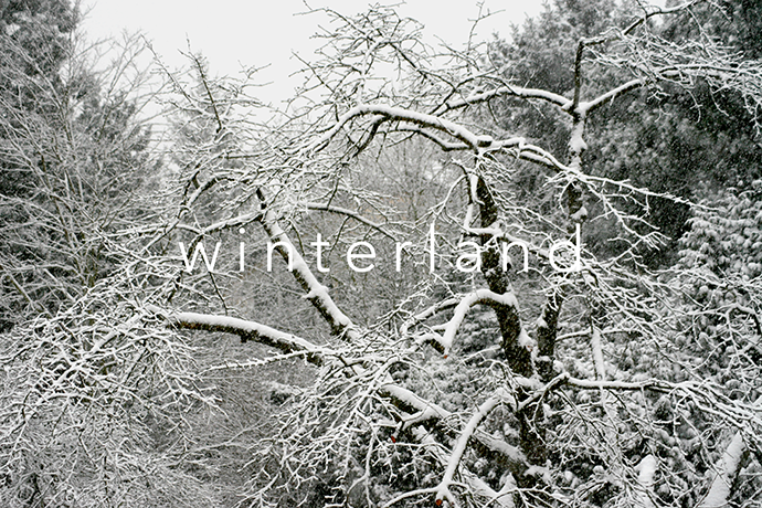 __winterland_cologne